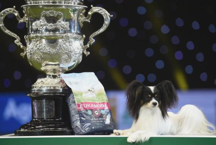 Brexit worries overseas dogs Crufts