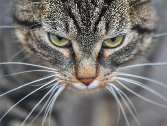 Brighton 'cat killer': Suspect charged attacks 16 animals