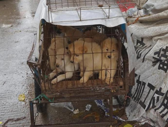 China's dog-meat opens