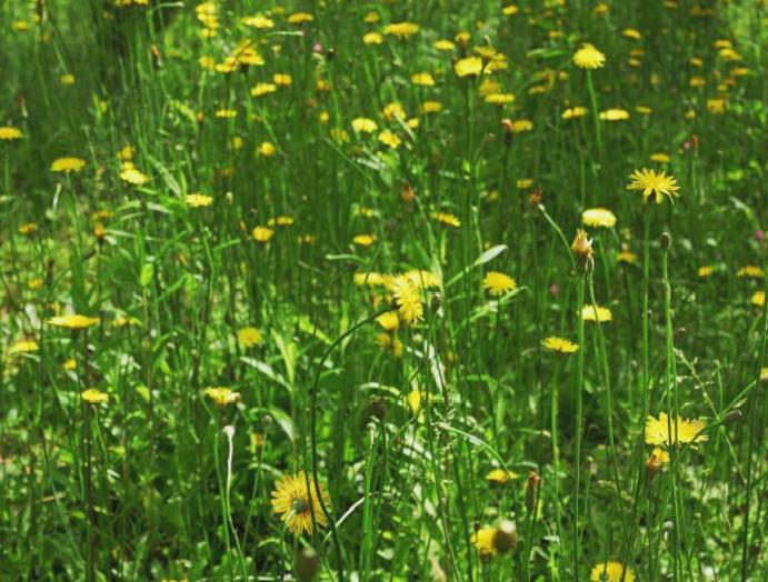 Climate change: Wildflowers Earth's continues