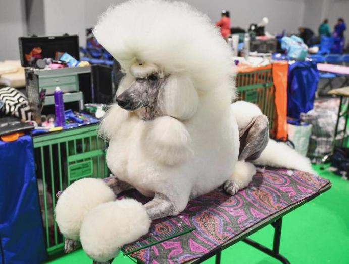 Crufts 2020 - live: Follow