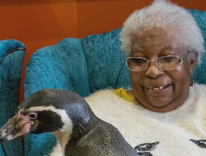 Elderly receives penguins 'makes true'