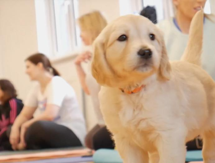 I went puppy yoga is was