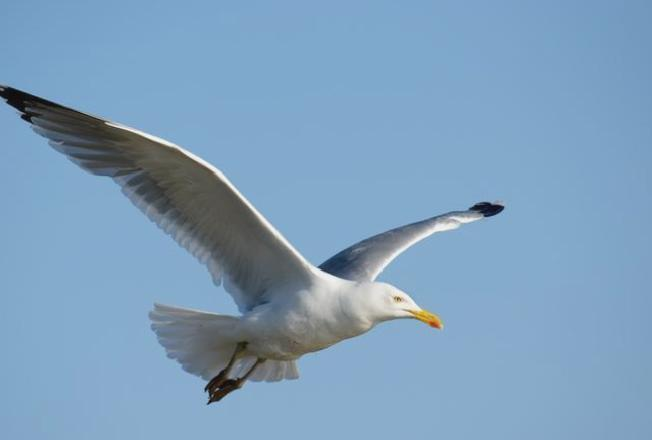 Pensioner arrested beating seagull