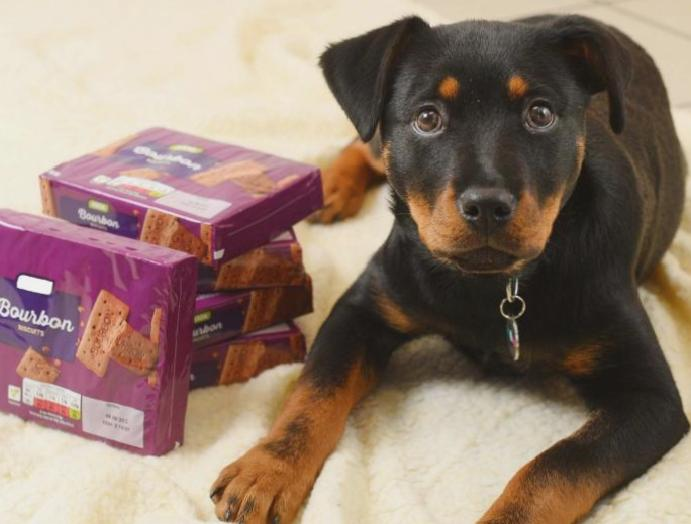 Puppy killed biscuits, prompting owners