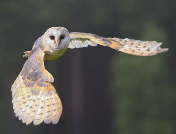 RSPB accuses 'wild claims' HS2 says is 'worst practice'