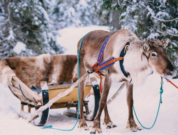 RSPCA calls reindeer Christmas grottos banned