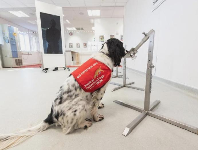 Specially trained 'Covid detection dogs' sniff coronavirus