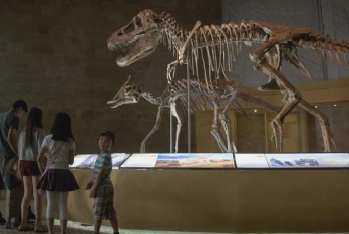 The real-life Indiana Jones Mongolia's stolen dinosaur fossils