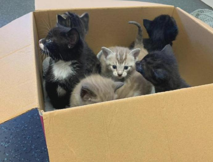 Thousands kittens lockdown impacts neutering procedures, charities